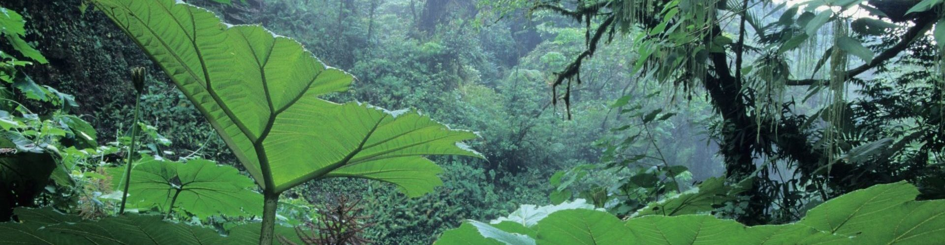 Costa Rica, Monteverde Nebelwald, Latin America Tours, Reisen