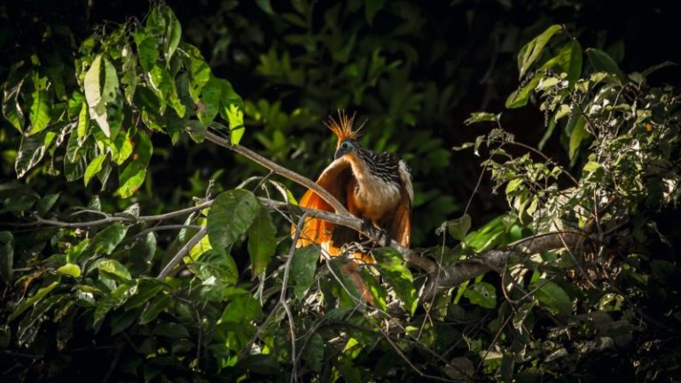 Der Amazonas-Urwald in Peru –  eines der letzten unberührten Naturparadiese der Welt