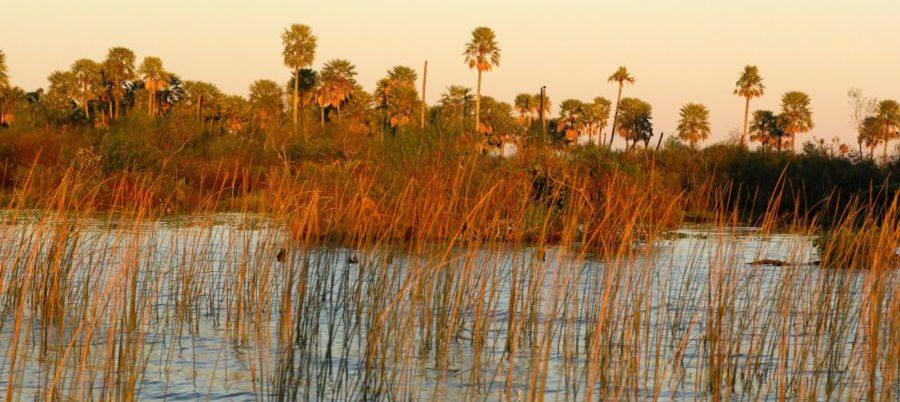 Argentinien, Estero de Ibera Sumpf, Schilf im Abendlicht, Latin America Tours