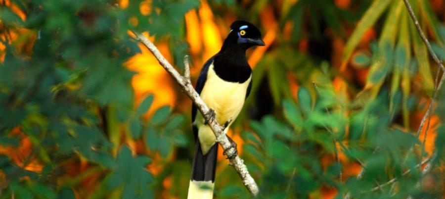 rgentinien, exotischer Vogel, Iguazu, Latin America Tours