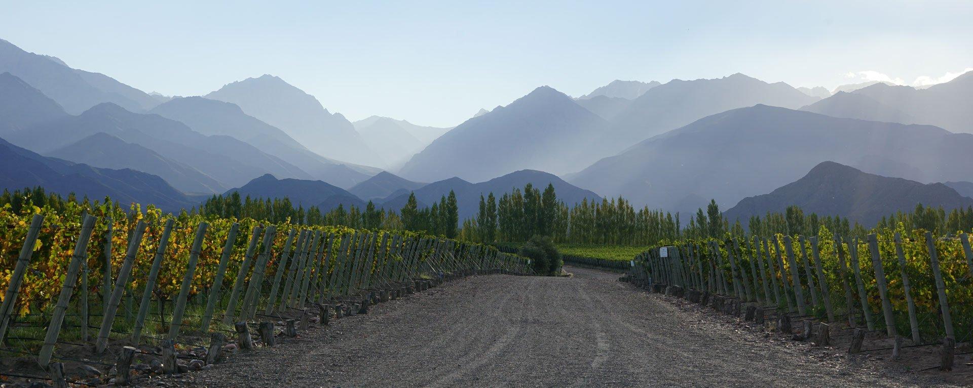 Argentinien, Weingut in Mendoza, Berge im Hintergrund, Latin America Tours, Reisen