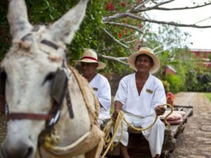 Mexiko, Hacienda Temozon, Mexiko Reise planen, Latin America Tours