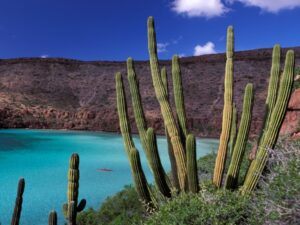 Mexiko, Kaktus, Mexiko Reise planen, Latin America Tours