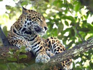 Mexiko, Jaguar, Mexiko Reise planen, Latin America Tours