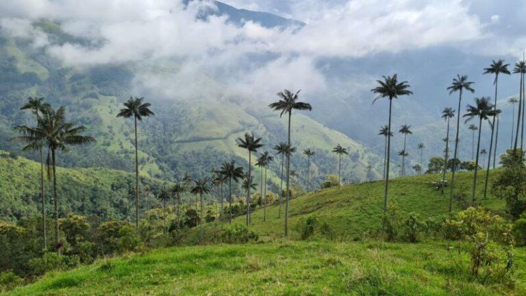 Kolumbien: Riesenpalmen von Pijao, die Alternative zu Cocora